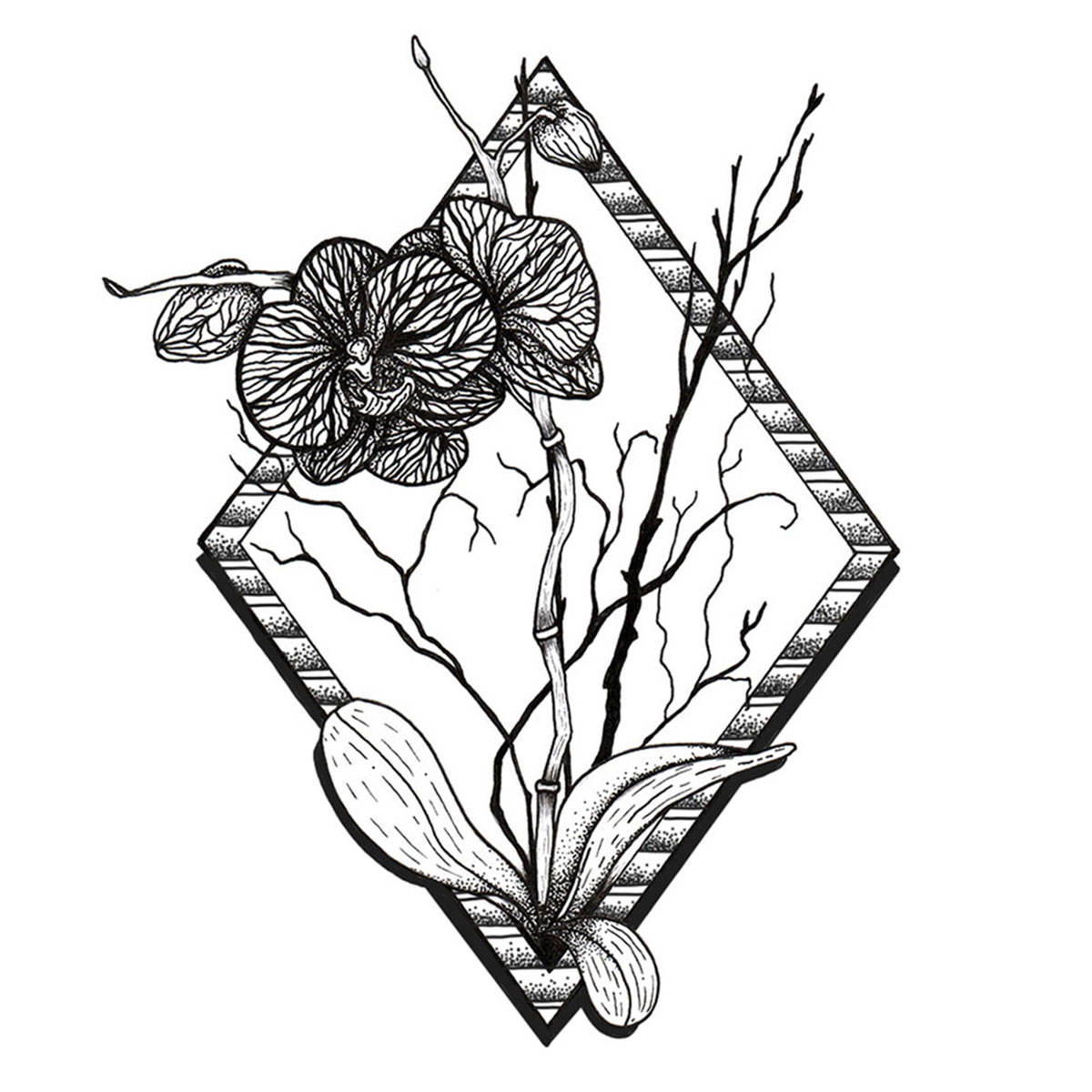 Illustration Orchidee