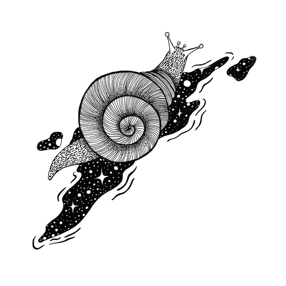 Illustration Schecke